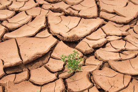 Woestijn gras Stockfoto