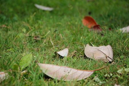 dode bladeren: Litter on the grass