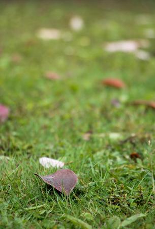 Litter on the grass