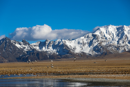 Landscape view of migratory birds at the snow capped mountain Stock Photo