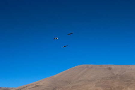Landscape view of migratory birds flying above the mountain under the blue sky