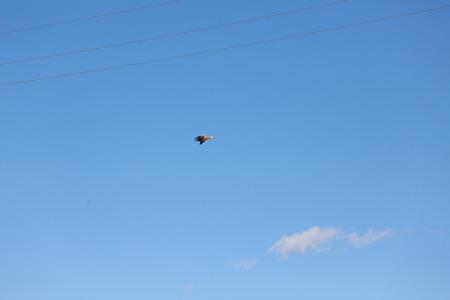 Bird flying in the blue sky