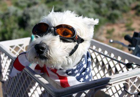 Dog ready for a dusty ATV ride.  Фото со стока