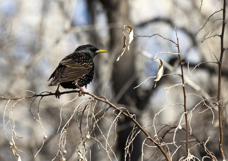 Young bird on a tree branch