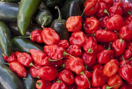 habanero: Habanero and Jalapeno Hot Peppers. Stock Photo