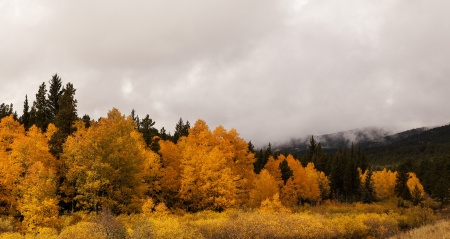 moutains: View of aspen trees in fall colors in the moutains of Colorado.