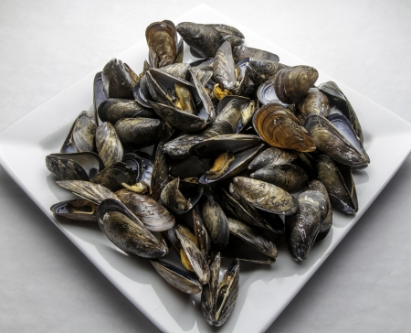 Freshly steamed mussels
