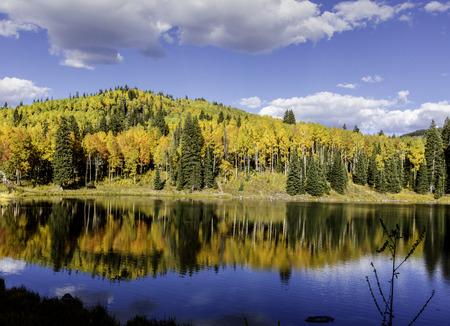 aspen tree: Colorful aspen tree reflection in a lake.