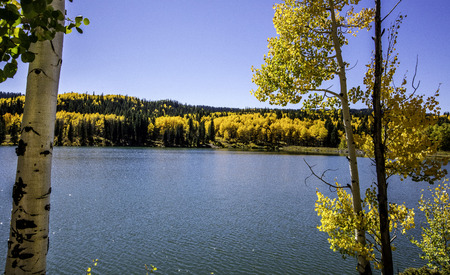 Colorful aspen trees around a lake. Фото со стока