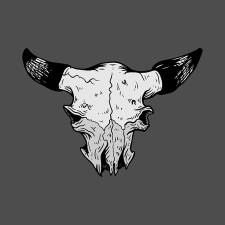 cow vector: Isolated black and white vector Cow skull
