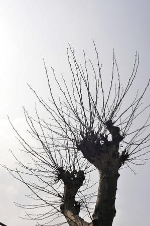 disheveled: Disheveled branches Stock Photo