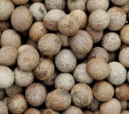 sanskrit: sacred figs Stock Photo