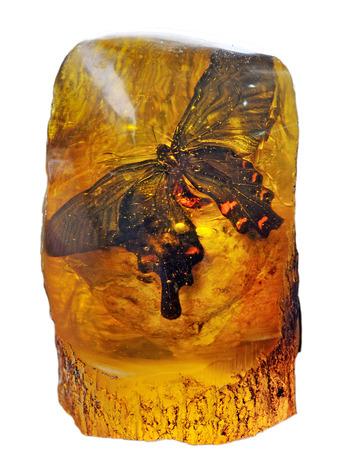 주황색 나비 스톡 콘텐츠