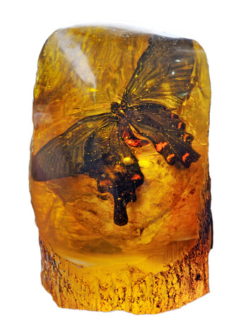 butterfly in the amber