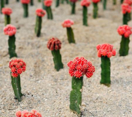 drought    resistant plant: Succulents