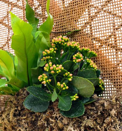 soilless cultivation: Dimensional bonsai Stock Photo