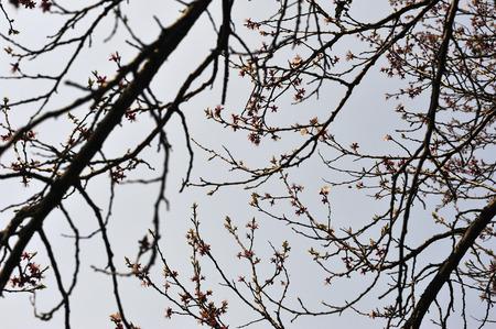 nines: Apricot tree