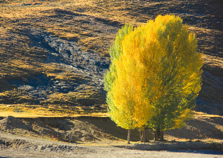 charmed: Populus euphratica forest Stock Photo