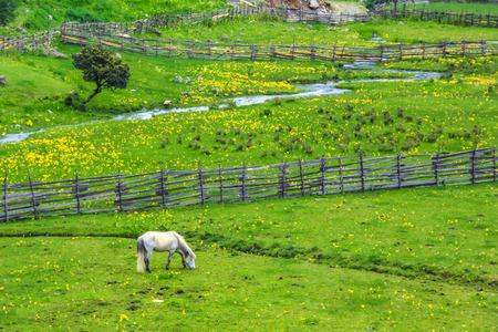 highlands: highlands scenery