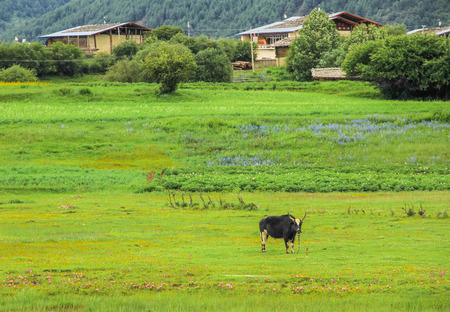 and the stakes: Grassland scenery