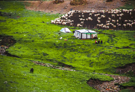 animal husbandry: The sheep herders