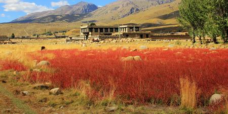 red grass: red grass