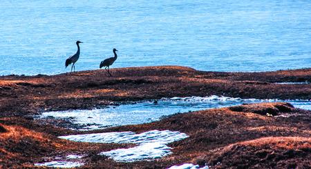 water birds: water birds Stock Photo