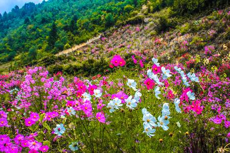 plateau of flowers: meadow