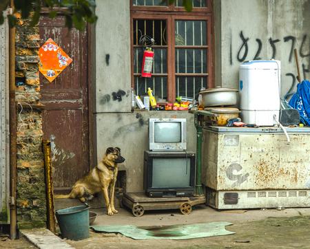 guard dog: Guard dog