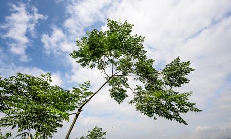 permeability: trees