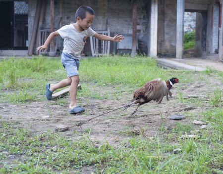 getaways: Kid chasing a chicken