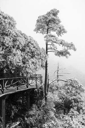 vegetation: alpine vegetation