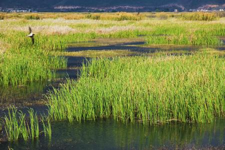 Wetland Kho ảnh