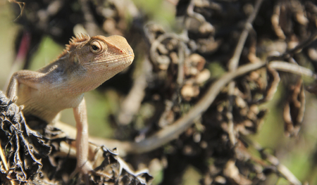 coldblooded: lizard close-up