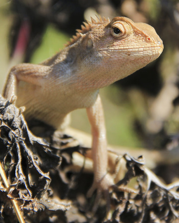 coldblooded: lizard close up