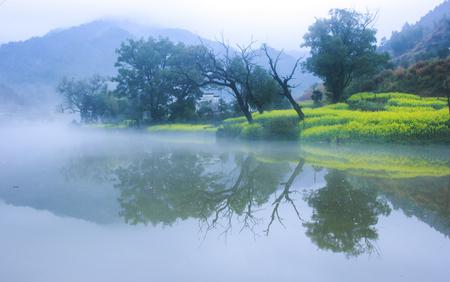waterside: nature scenery