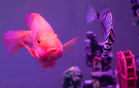 loot: parrot fish Stock Photo