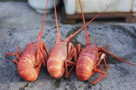 lobsters: lobsters