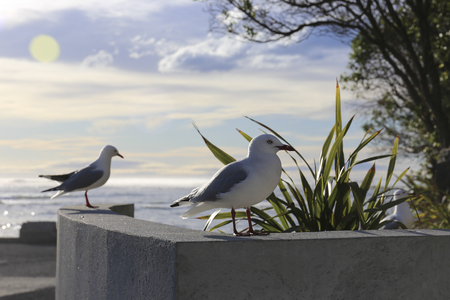 birds scenery: seagulls