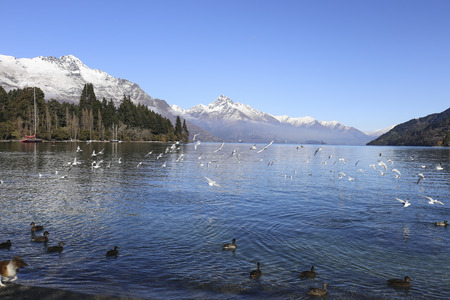 nature scenery: Nature scenery with seagulls flying around