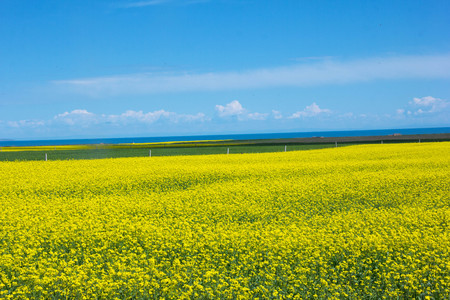 tortuous: Flower bed in front of the sea Stock Photo