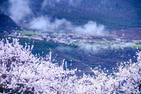 티벳 Linzhi 풍경