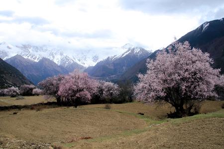 plateau: Tibet Linzhi scenery