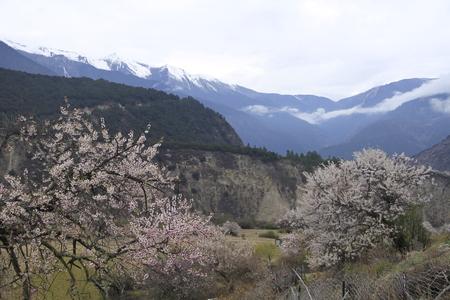 Primavera a Linzhi Archivio Fotografico - 83594516