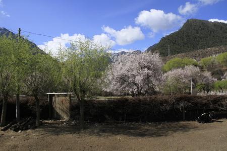 봄 동안 Linzhi의 자연 풍경 경관보기 스톡 콘텐츠