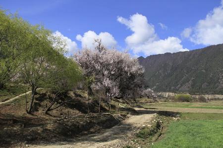 Paesaggio paesaggio natura vista di Linzhi Archivio Fotografico - 83609758
