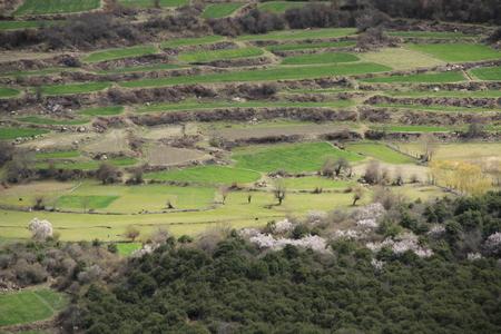 Linzhi의 자연 경관 풍경보기