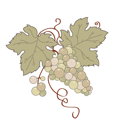 Stylized grape vine. Illustration
