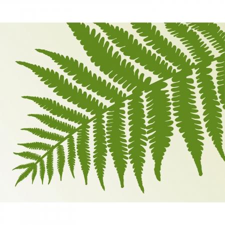frond: Single fern frond