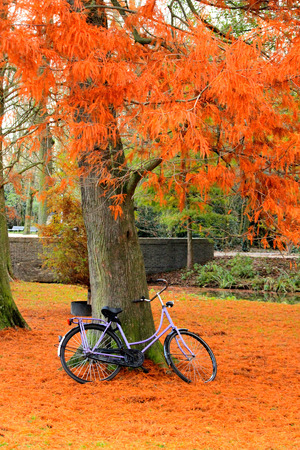 Bicycle in park, fall day in Vondelpark Amsterdam